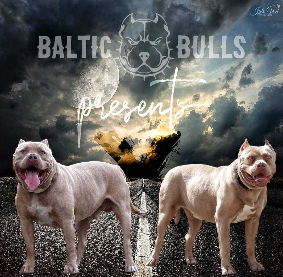 Baltic-Bulls-Neuigkeiten-07-Hero01